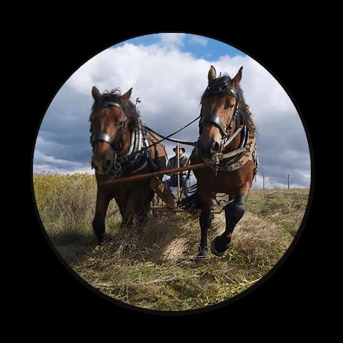 Grünlandwirtschaft mit Pferden öipk