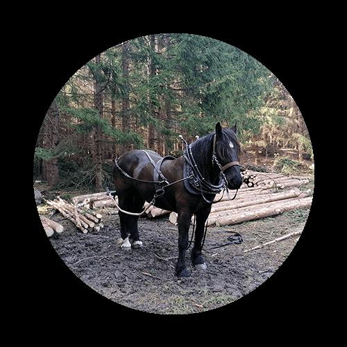 Einspänniges Holzrücken mit Pferden