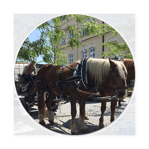 Pferde im kommunalen Dienst öipk