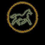 Sinnvolles Pferdetraining (4)